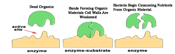 enzyme function_559x172