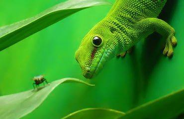 Klimato kaita - gyvūnų rūšys